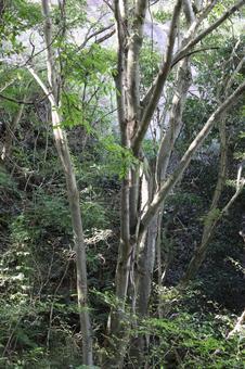Scenery of Kohoka Nature Park September 2021 (7)