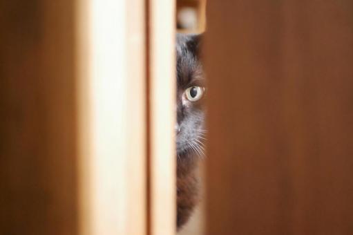Cat peeking through the gap