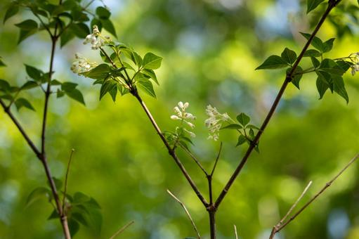 고추 나무의 흰 꽃