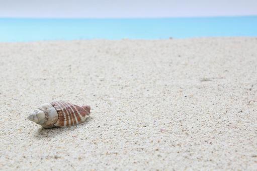 Beach seashell 23