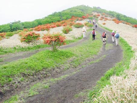 People walking in the mountains of early summer when azaleas bloom (Akagi / Nabewariyama)