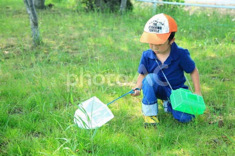 虫採り中の子供2の写真
