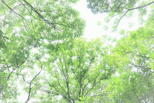 Beautiful green background material of lush summer sunbeams