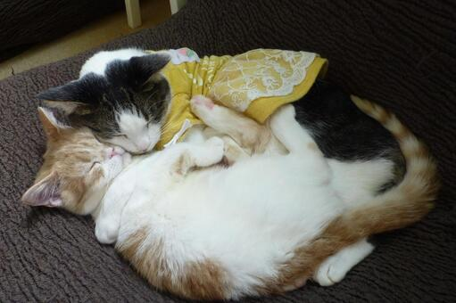 고양이 94 사이 좋게자는 고양이
