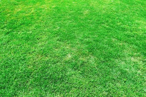 Green grass | Green background material