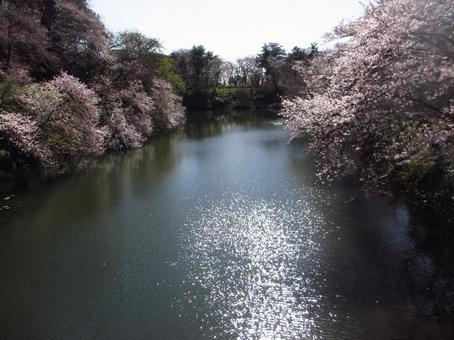 Moat and cherry tree 3