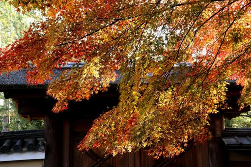 Kyoto Autumn leaves Daitokuji Temple in Kyoto
