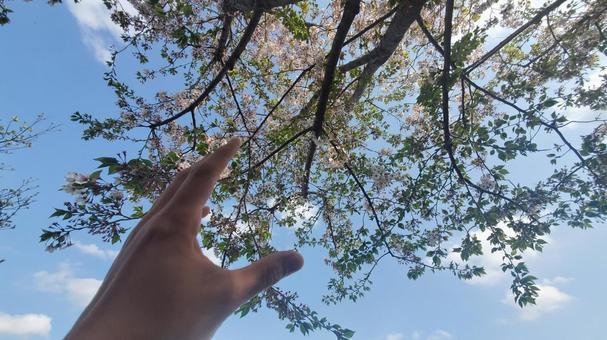 櫻花空手道
