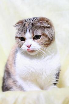 Tiger cat 5