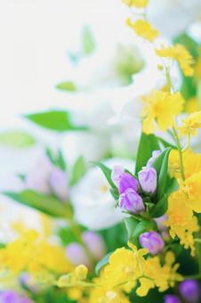 Purple, white and yellow Buddha flowers