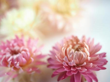 Dry Flower 02