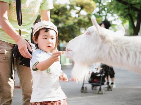 Itabashi Children's Zoo