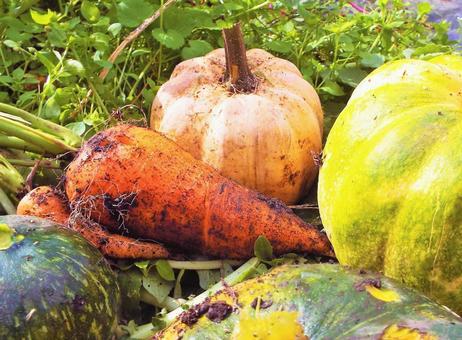 가을의 수확 호박 · 당근 ⑤