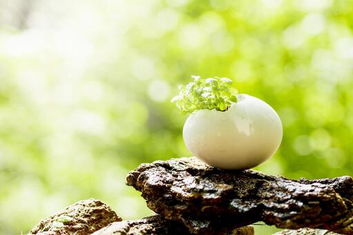 Herbs born from a small egg in the forest _ 2