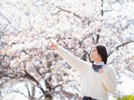 Graduation Sakura Enrollment Image of high school girls Pointing