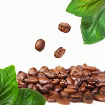 커피 원두 커피 3 가지 (잎 세트)