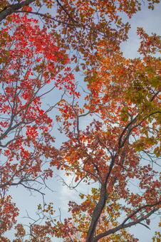 Autumn leaves trees 1