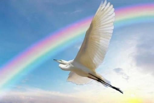 A heron flying in the rainbow sky