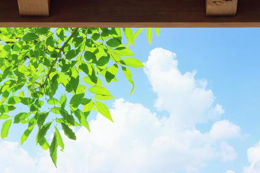 绿色的窗帘和蓝蓝的天空
