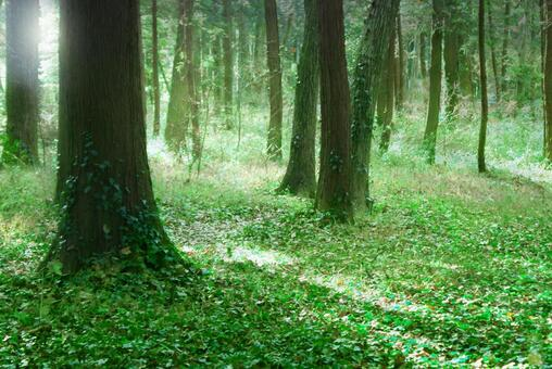 Trees_Forest_112