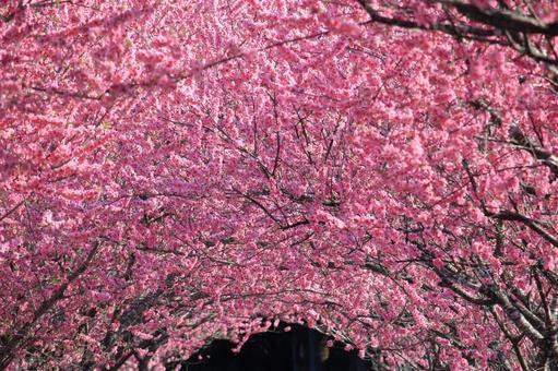 Flower peach tunnel