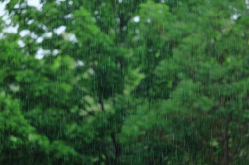 게릴라 호우 빗방울 (배경 흐림에 나무)