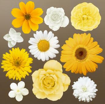 【Smooth clipping】 Flower set white & yellow