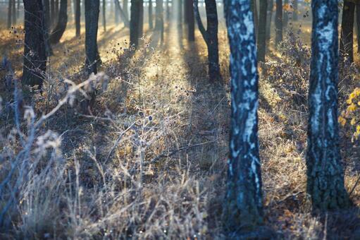 Forest ground 7