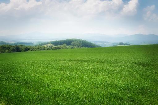 The vast countryside of Biei, Hokkaido