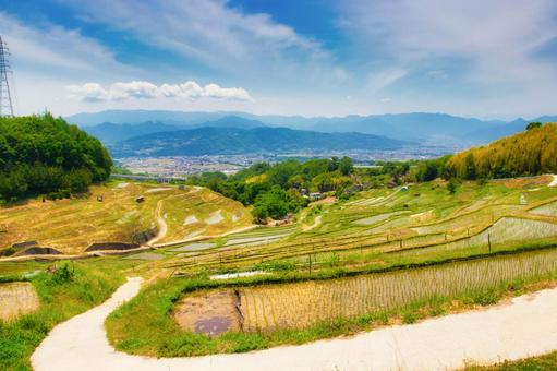 Early summer Inagura rice terraces