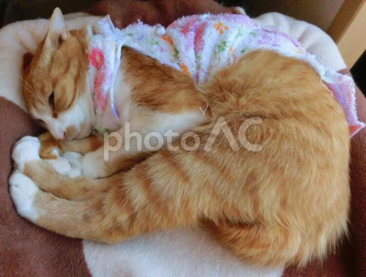 縮こまった猫の写真