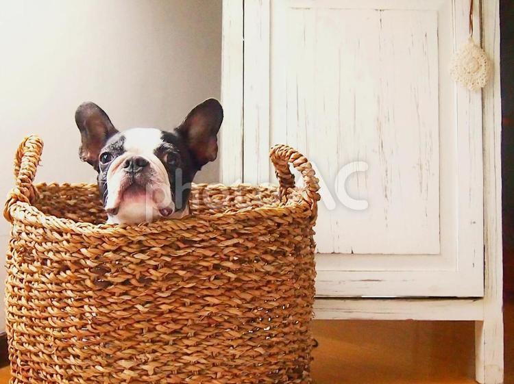 犬 「なーに?」の写真