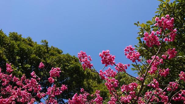 푸른 하늘과 꽃