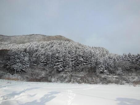 Hakodate winter scenery