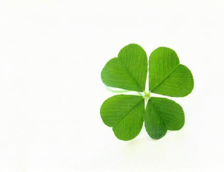 Four leaf clover 2