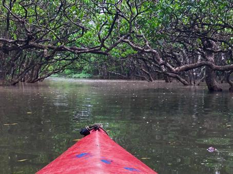 Amami Oshima Mangrove Forest