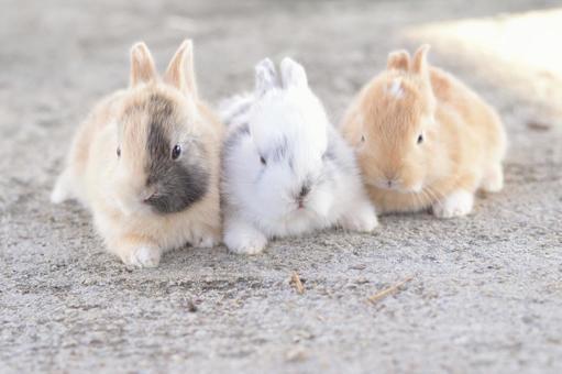 아이 토끼