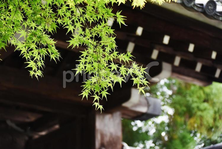 京都のお寺にての写真