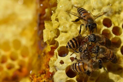 World of nest honey and bees Close-up Material Background SDGs sdgs Sustainable