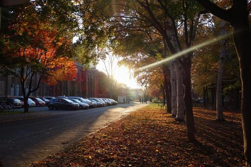 Hokkaido University 6
