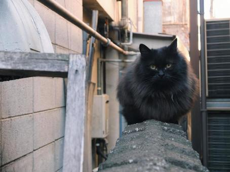Black cat on the wall