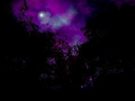 Creepy forest moonlit night wrapped in purple