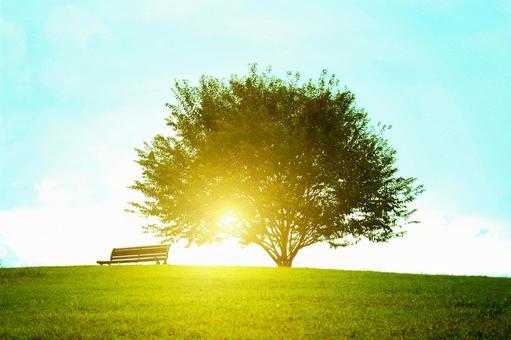 Sunlight through the grassy plain 2