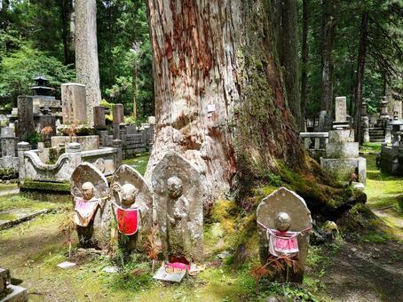 高野山和地藏的大樹