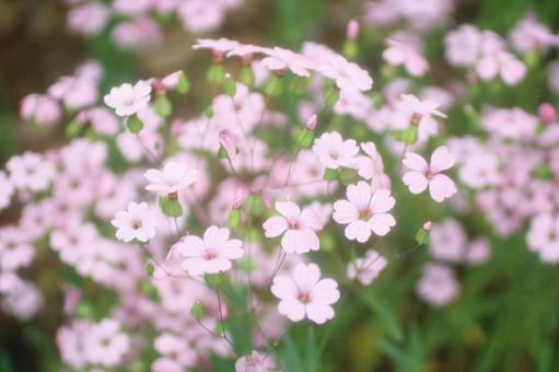 Blurred Grass Pink 1