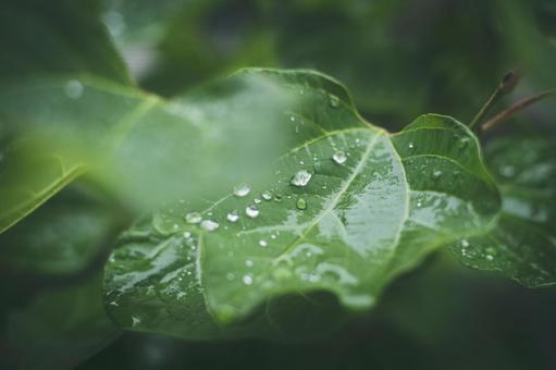 Image of rainy season