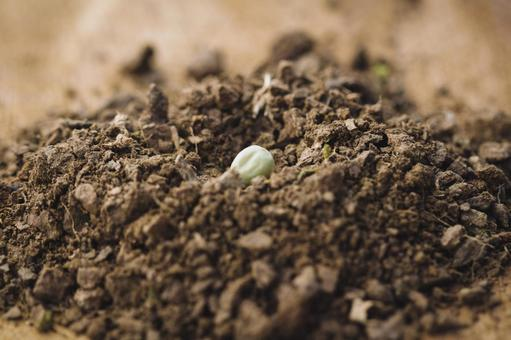 흙 위에 씨앗 5