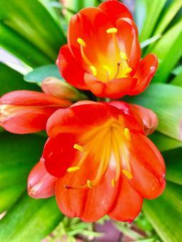 붉은 아름다운 꽃