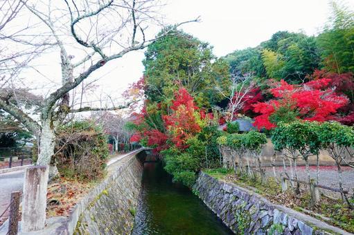 Autumn Kyoto Philosophy Road