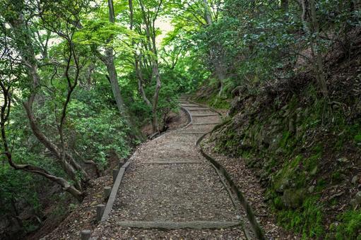 Mt. Wakakusa mountain trail surrounded by greenery